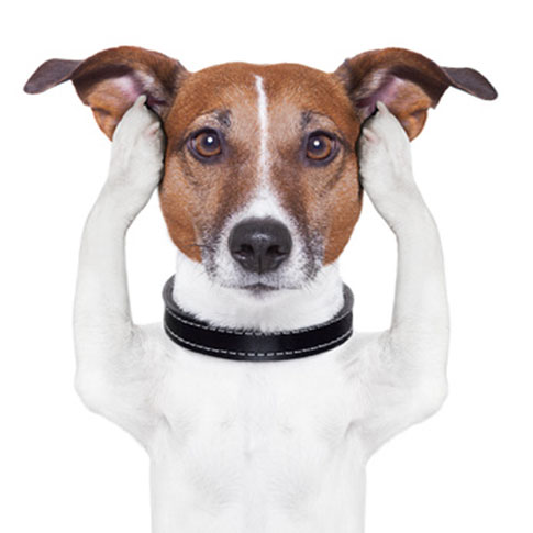 In der tiergestützten Pädagogik ist es zunächst wichtig, den Kindern den richtigen Umgang mit dem Hund beizubringen.