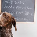 Tiergestützte Pädagogik hilft Kindern beim Lernen Selbstbewusstsein und Selbstständigkeit aufzubauen.