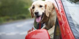Hundegitter-Transport-Auto