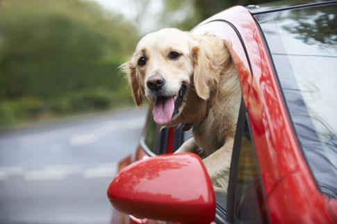 Hundegitter für den sicheren Transport im PKW.