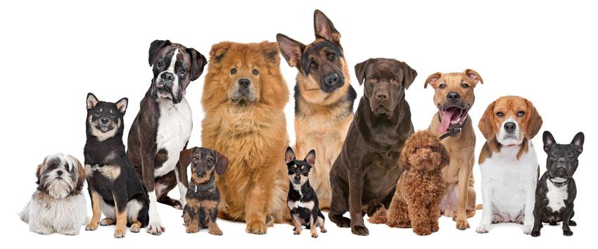 Welche Hunderasse passt am besten zu mir - Test