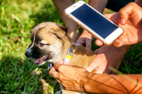Hundehalsbänder mit GPS-Tracker Funktion und Smartphone APP helfen, entlaufene Hunde wiederzufinden.