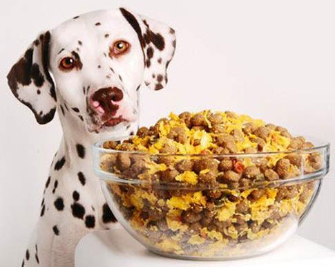 Ein gutes Hundefutter ist stets wichtig für die Gesundheit des Hundes.