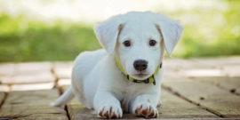 Anschaffung-eines-Hundes