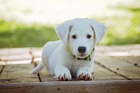 Die Anschaffung eines Hundes verursacht nicht unerhebliche Kosten.