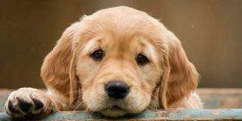 Das-richtige-Haus-für-Hundehalter