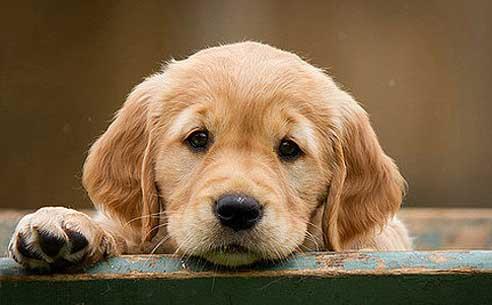 Auch der Hund freut sich über ein eigenes Zuhause.